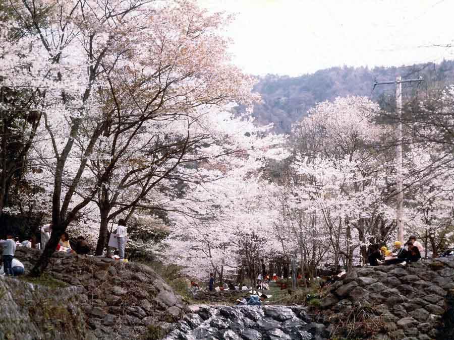 霞間ヶ渓の桜:池田町