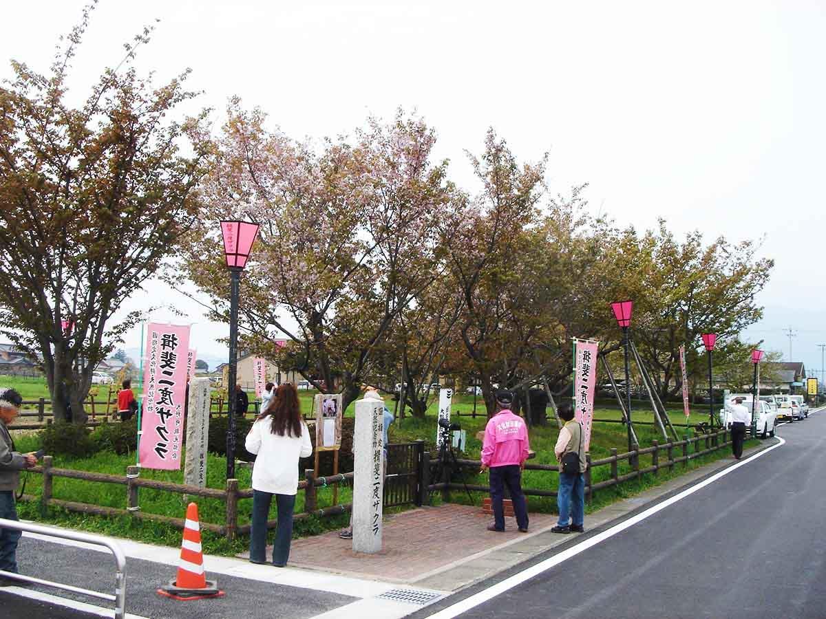 揖斐二度桜:大野町