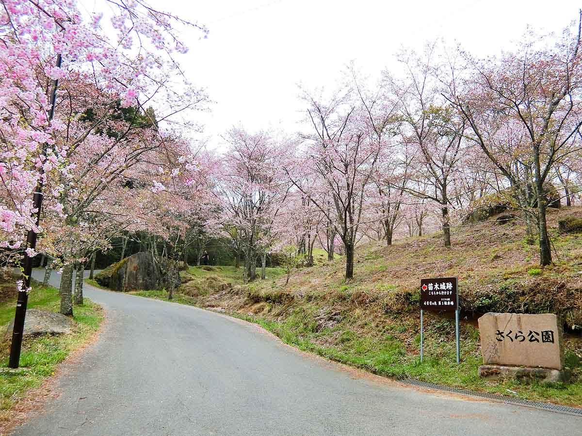 苗木さくら公園:中津川市