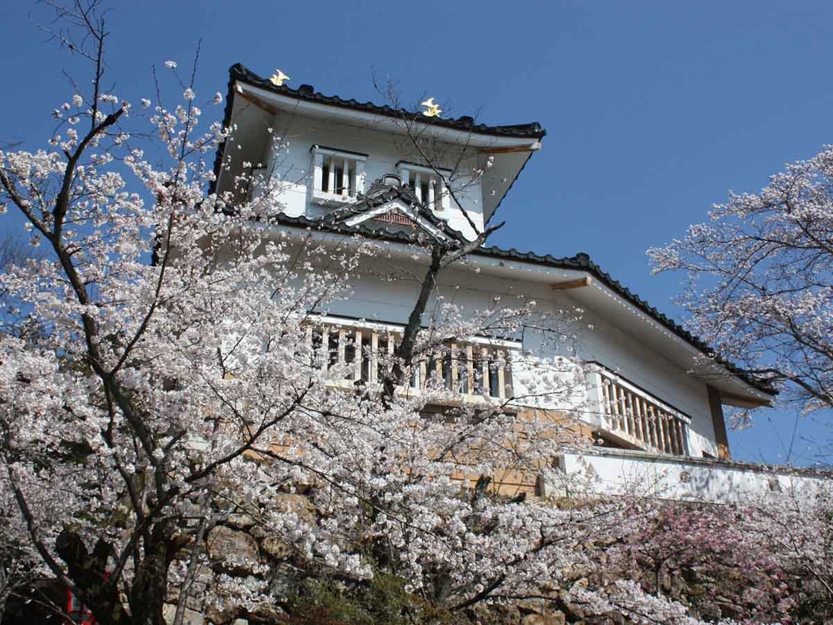 小倉公園の桜:美濃市