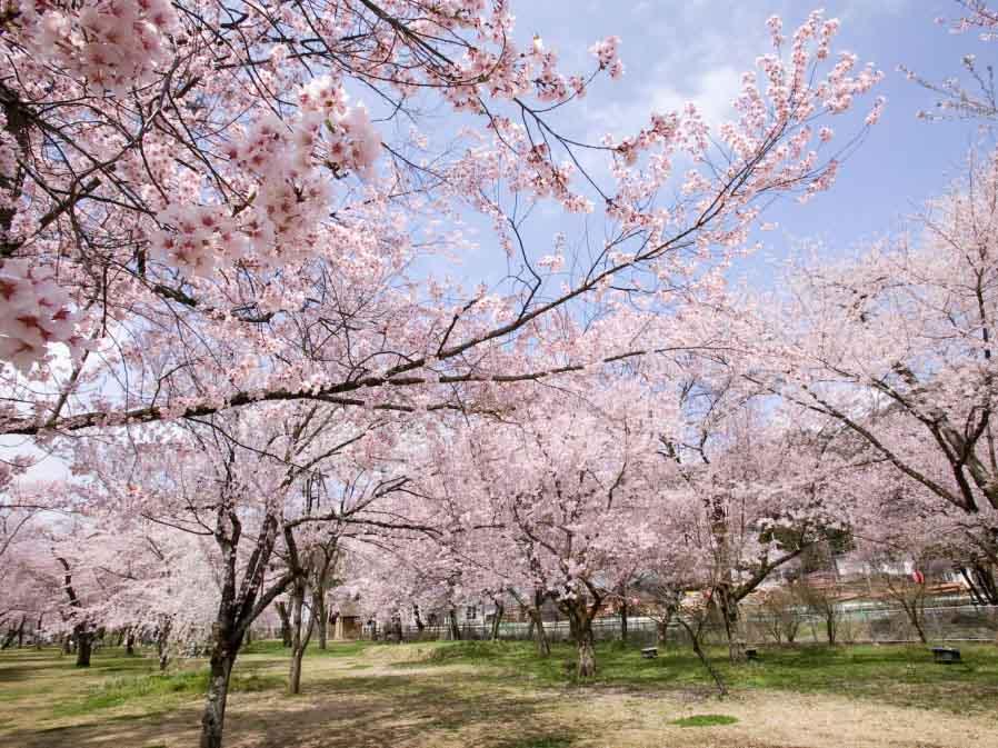 桜野公園(高山市)