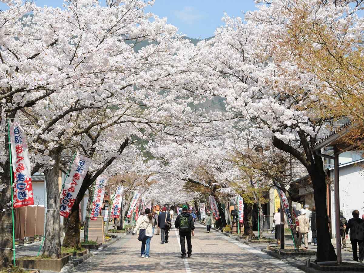 谷汲山門前の桜:揖斐川町