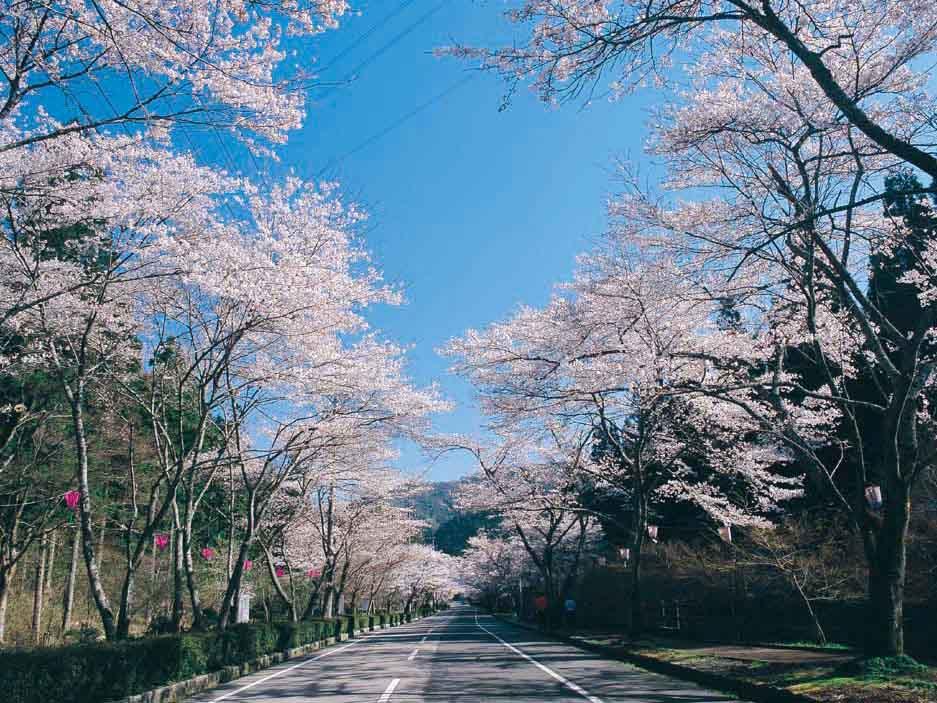 寺尾ヶ原千本桜公園:関市